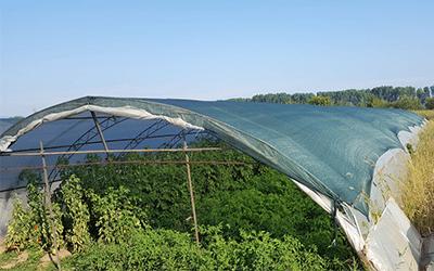 Ползите на мрежа за засенчване на оранжерии
