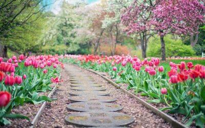 Как да си направим красива градина?