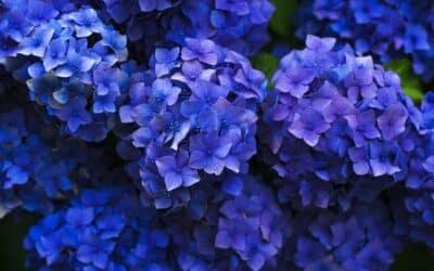 Кои цветя виреят на сянка?