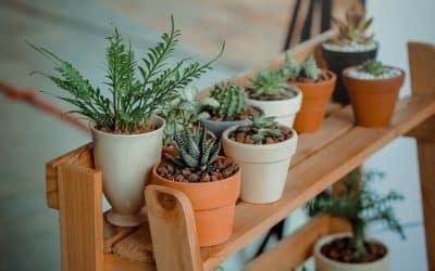 Студено време и ниски температури – как да предпазите растенията си?